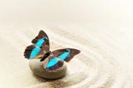 鹅卵石上蝴蝶图片(6张)
