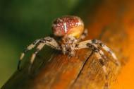 形态各异的蜘蛛图片(10张)