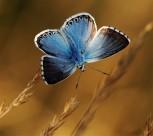 美丽的蝴蝶图片(11张)