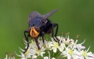 苍蝇高清图片(13张)