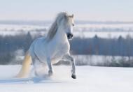 奔跑的骏马图片(6张)