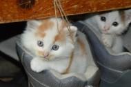 可爱的猫咪图片(15张)