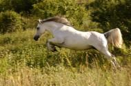 白色的骏马图片(11张)