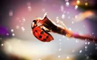 瓢虫图片(14张)