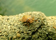 甲虫图片(16张)