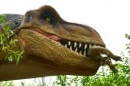 恐龙模型和恐龙化石图片(11张)