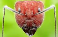 各种蚂蚁微距图片(11张)