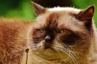 胖乎乎的猫咪图片(10张)