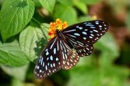 恋花的蝴蝶图片(9张)