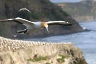 飞翔的海鸥图片(13张)