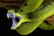 蛇类图片(7张)
