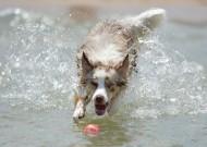 玩耍的狗狗图片(14张)