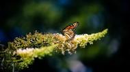 漂亮的花蝴蝶图片(10张)