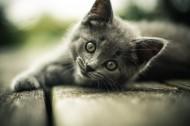 神态各异的灰猫图片(10张)