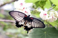 鲜花上的蝴蝶图片(11张)
