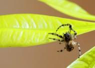 蜘蛛图片(13张)