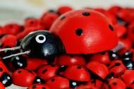 可爱彩色小瓢虫图片(15张)