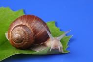 蜗牛超清图片(8张)