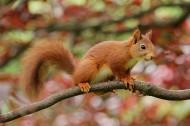 灵巧可爱的小松鼠图片(15张)