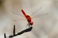停歇的蜻蜓图片(13张)