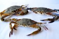 螃蟹高清图片(14张)