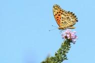 蝴蝶图片(6张)