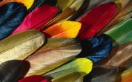 漂亮羽毛特写图片(20张)