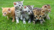 可爱的小奶猫图片(10张)