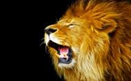 狮子图片(9张)
