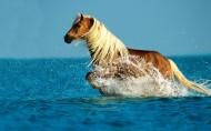 奔跑的动物图片(20张)