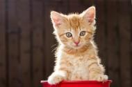 卖萌的虎斑猫图片(5张)