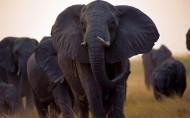 非洲野生动物图片(14张)