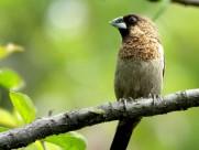 斑纹鸟图片(7张)