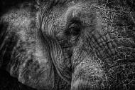 憨厚的大象图片(20张)