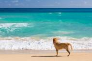 沙滩上的狗狗图片(15张)