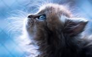呆萌可爱的猫咪图片(11张)