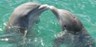 可爱海豚高清图片(15张)