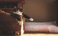 可爱萌猫图片(10张)