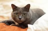 毛茸茸的猫咪图片(10张)
