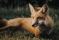 神秘灵气的狐狸图片(10张)