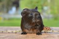 机灵可爱的老鼠图片(11张)