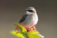 灰林即鸟图片(8张)