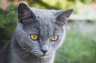 猫的头部特写图片(10张)
