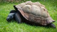 行动缓慢的乌龟图片(12张)