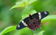 美丽的蝴蝶图片(23张)