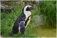 企鹅图片(15张)