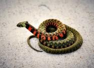一条五彩斑斓的蛇图片(16张)