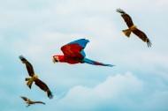 聪明的鹦鹉图片(10张)