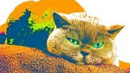 卖萌的猫咪图片(11张)