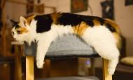 懒洋洋的猫咪图片(10张)